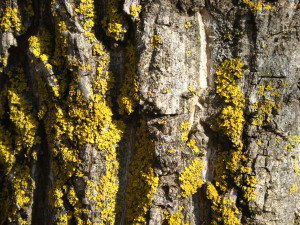 spring mold allergies