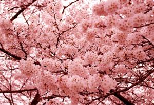 spring tree allergies
